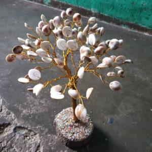 Gomtichkara-Tree