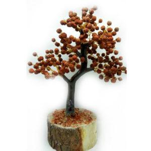 Rudraksh-Tree